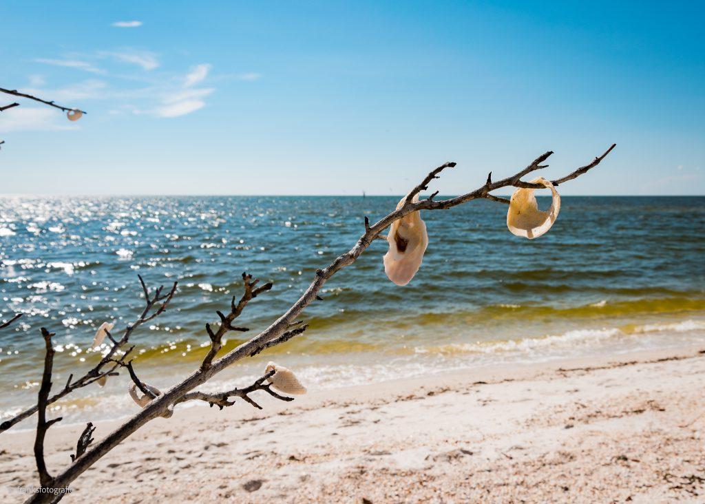 Traumhaftes Florida entdecken Barefoot Beach