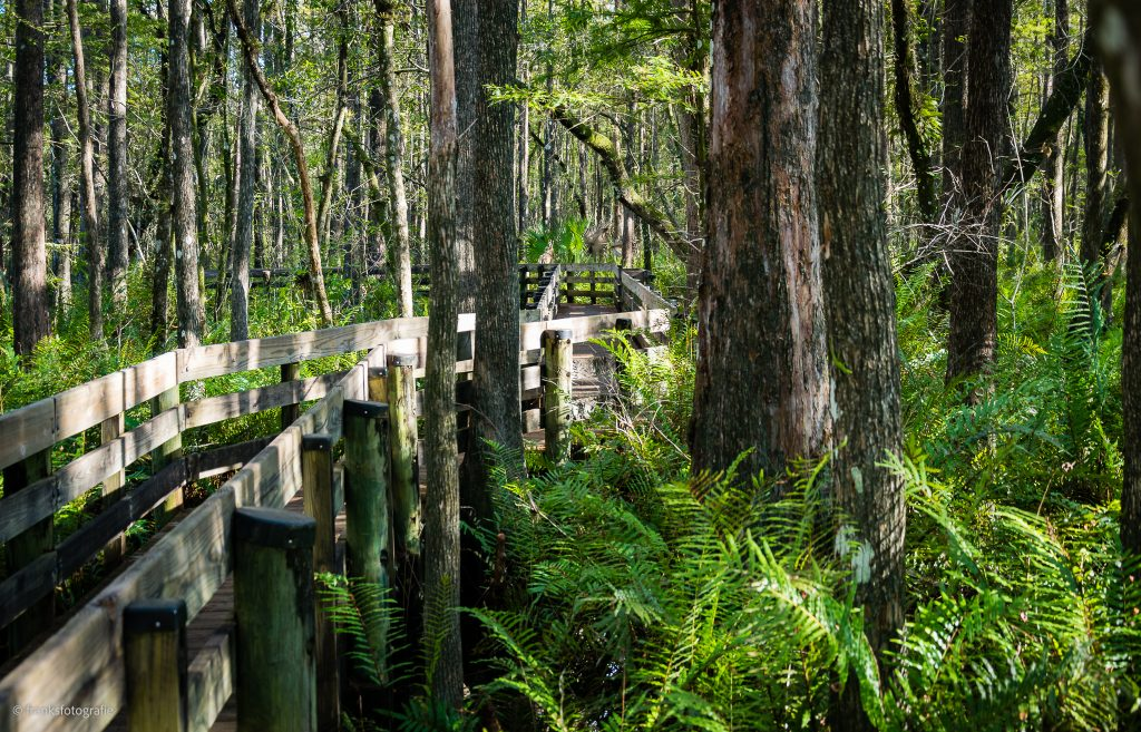 Traumhaftes Florida entdecken Slough Preserve